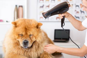 Do I Tip the Dog Groomer?   Diane Gottsman   Protocol School of Texas